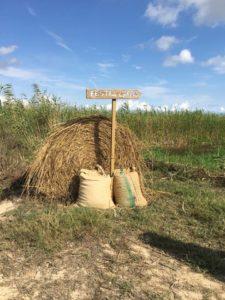 Fiestas de la siega y del arroz en les Terres de l'Ebre @ Terres de l'Ebre